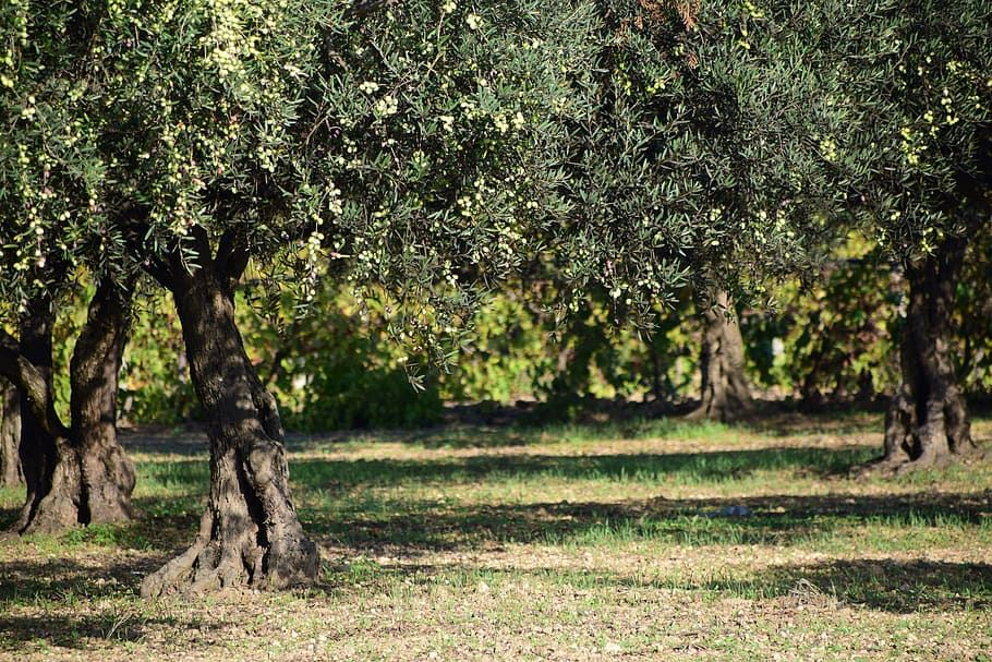 Picture for category Spain Approves New Rules Governing Olive Oil Quality and Standards
