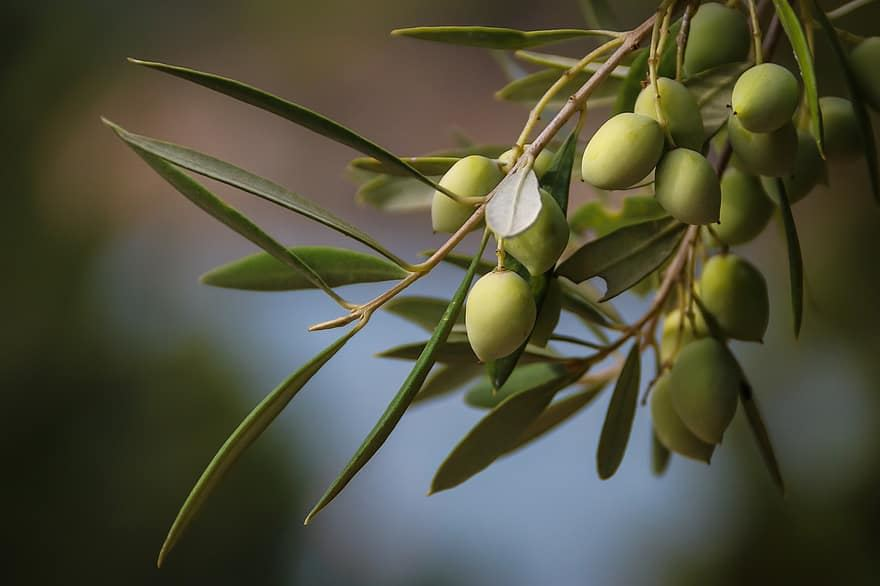 Picture for category The highest price internationally for the Greek Extra Virgin olive oil